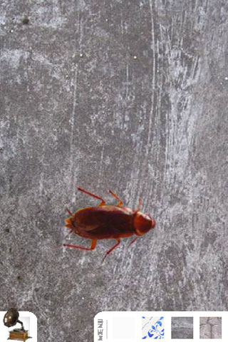 cucaracha Screenshot