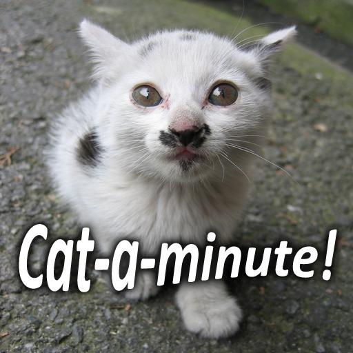 Cat-a-minute!